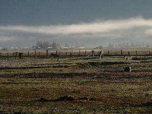 220-Horses